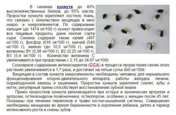 Все о здоровом питании: как принимать кунжутное семя, его польза и вред