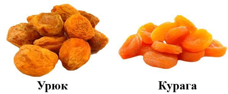 Сушеный абрикос без косточки: польза, способы приготовления