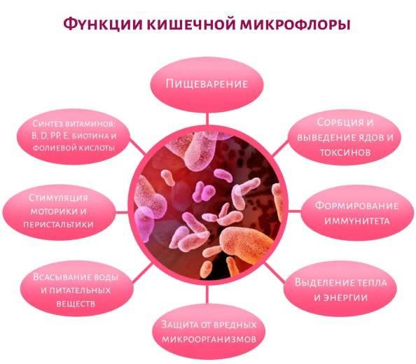 Новые функции кишечной микрофлоры