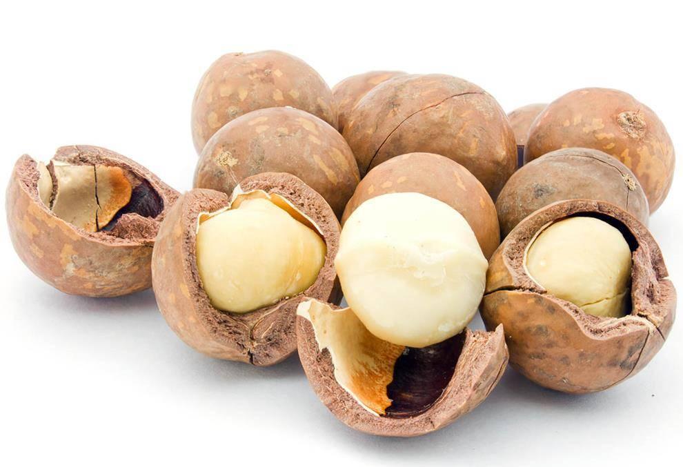 Можно ли йоркширскому терьеру орехи?