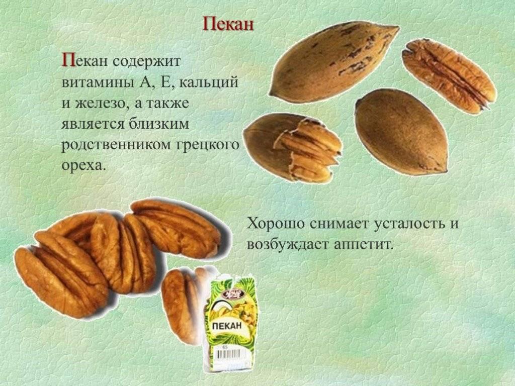 Орех пекан, полезные свойства и противопоказания