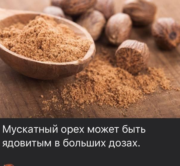 Мускатный орех: полезные свойства , противопоказания, применение дома