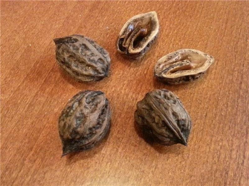 Комбинированный сад: грецкий орех и плодово-ягодные культуры — портал ореховод