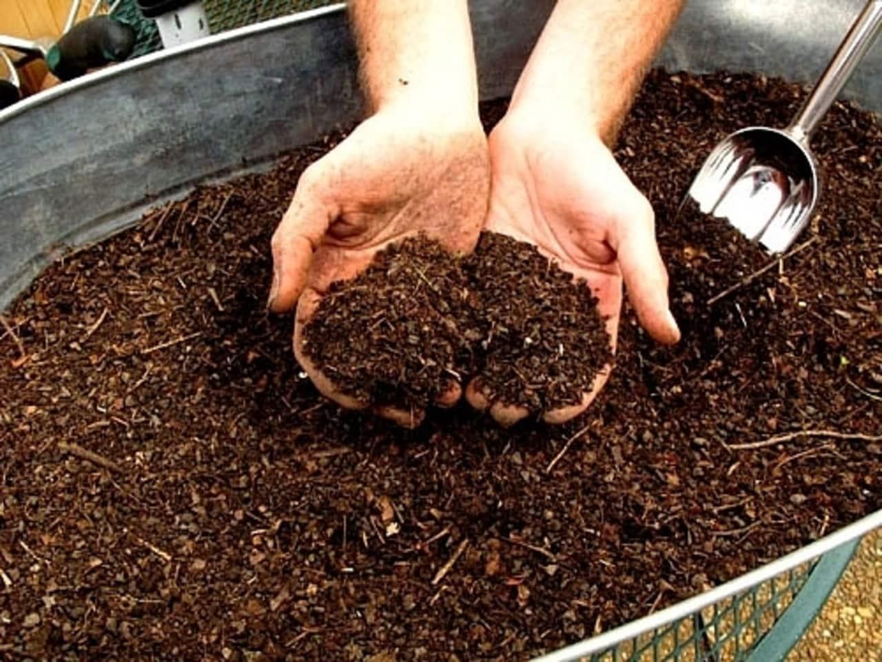 Шелуха от семечек, как удобрение. полезные свойства шелухи от семечек