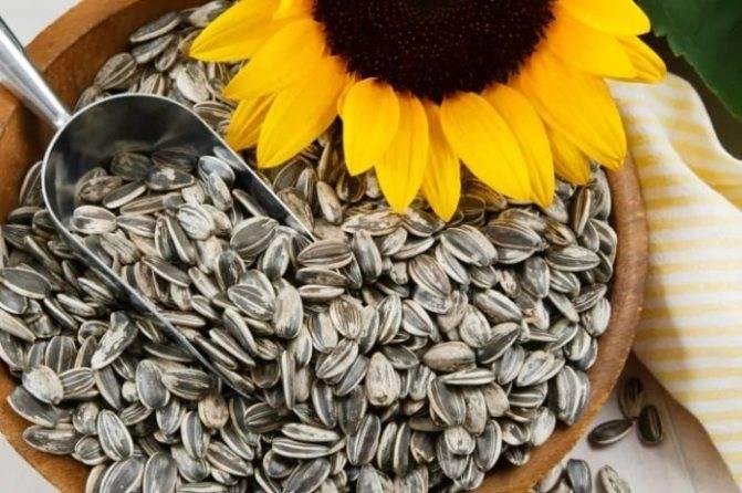 Зачем давать ребенку тыквенные семечки: скрытые бонусы витаминного продукта