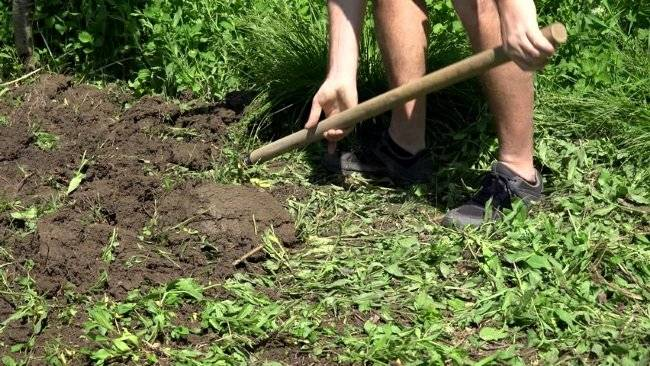 Сидераты: в чем польза, виды, посев, выращивание и заделка