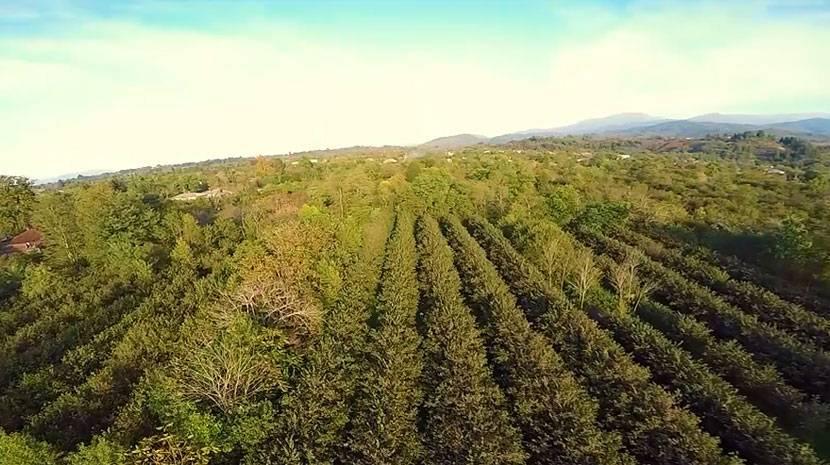 Мраморные клопы наступают: фермеры грузии бьют тревогу