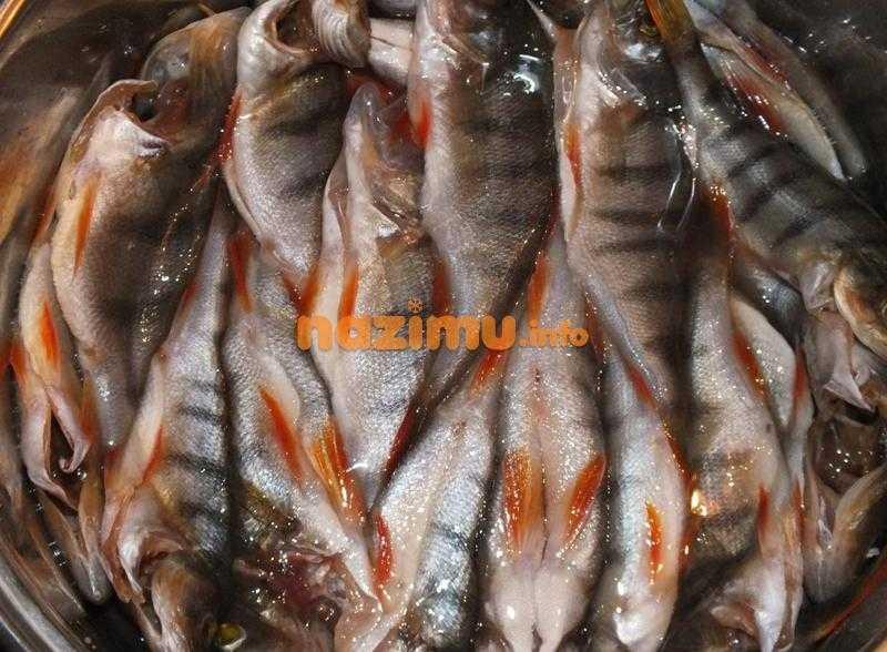 Засолка рыбы и вяление в домашних условиях   как засолить рыбу