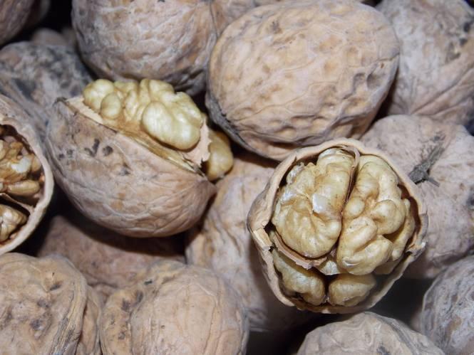 Умирающий лес. урожай орехов в кыргызстане собирают без учета воспроизводства