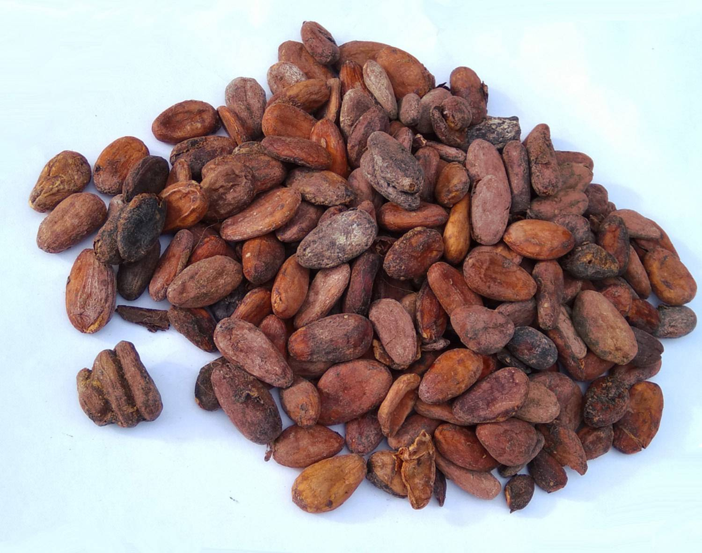 Какао бобы | польза, вред и свойства какао бобов | компетентно о здоровье на ilive
