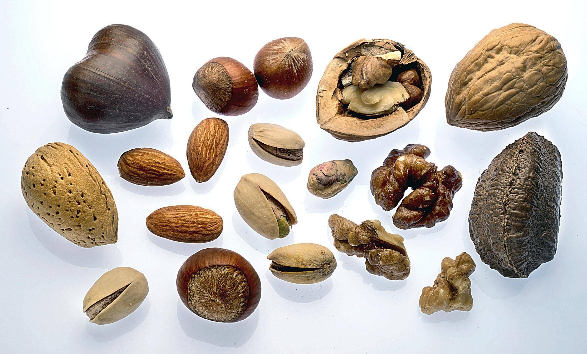 Орехи – описание видов с фото, полезные свойства для здоровья