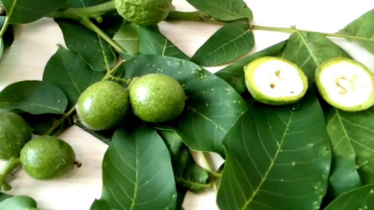 Зеленые грецкие орехи: польза и вред