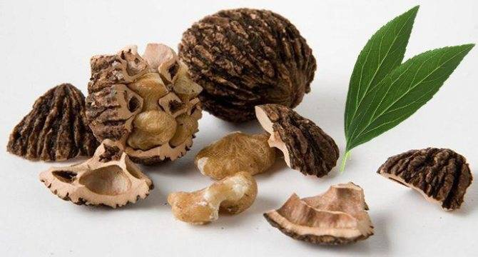 Применение настойки черного ореха для лечения