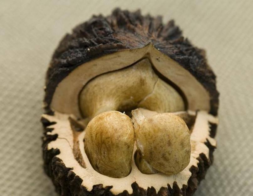 Черный орех - полезные свойства и противопоказания