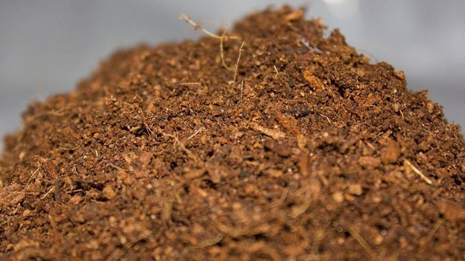 Кокосовый субстрат: как использовать для рассады