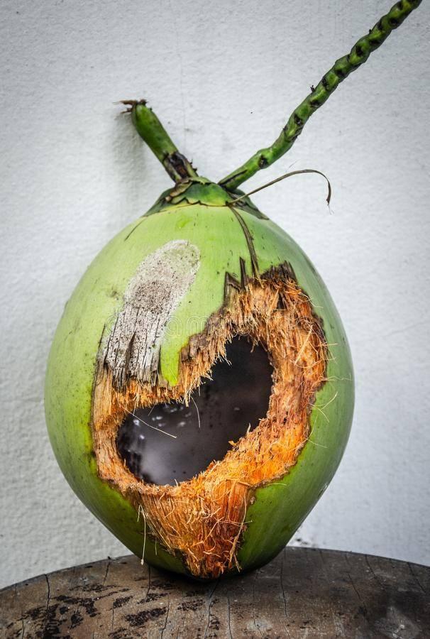 Зеленый кокос: почему орех может быть такого цвета, в чем его отличие от коричневого, как открыть этот плод?