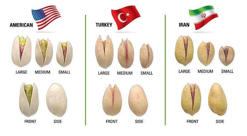 Все что нужно знать о разных видах ореха пекан