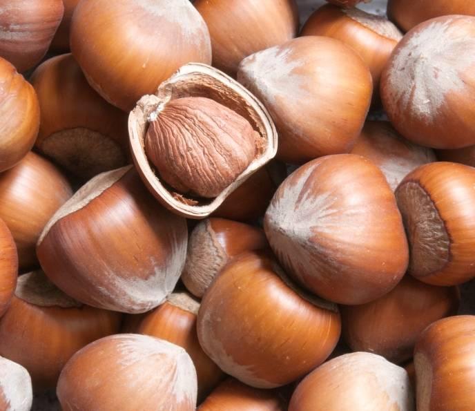 Фундук трапезунд: описание сорта, особенности выращивания