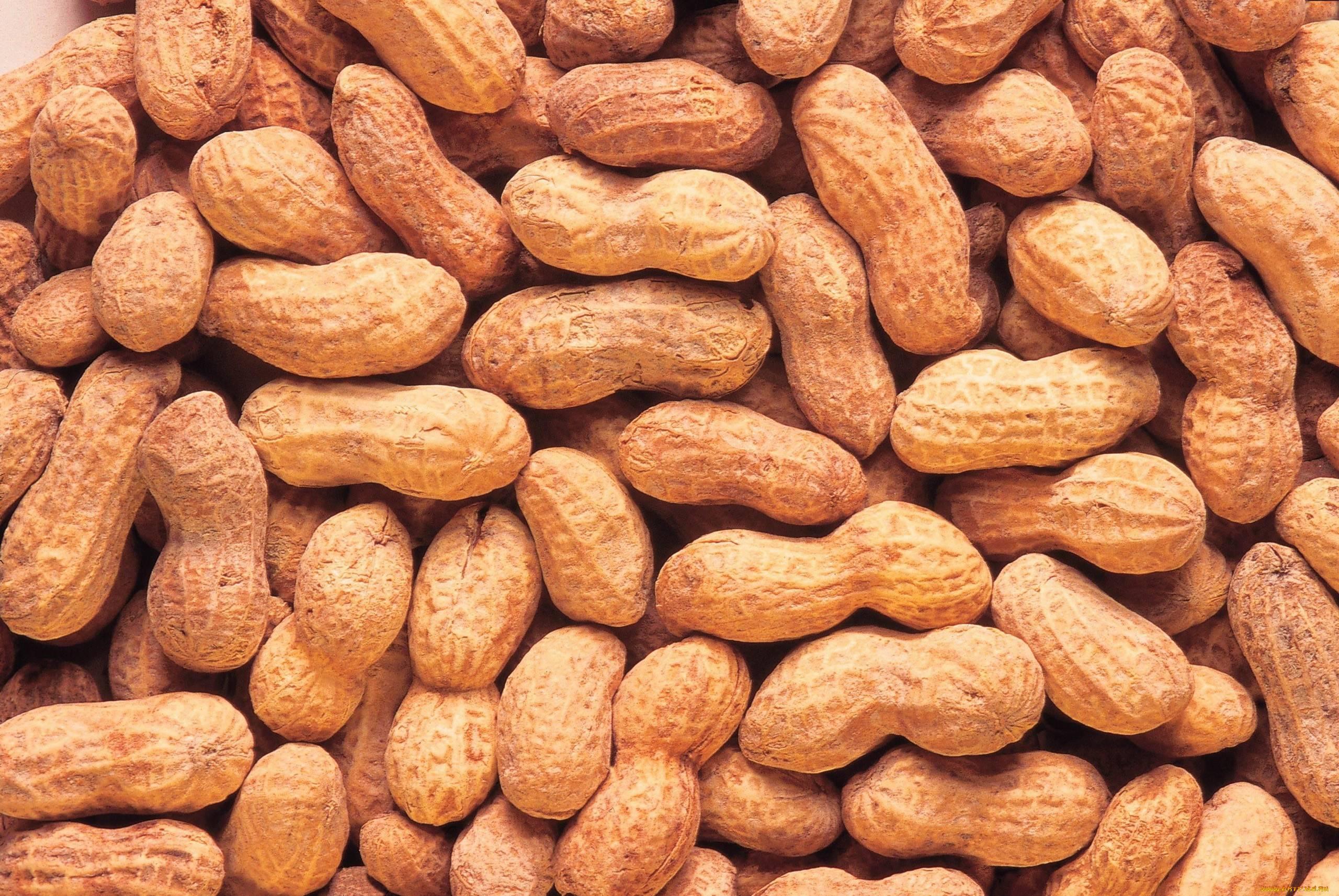 Польза арахиса для организма: 120 фото и обзор полезных элементов в составе арахиса