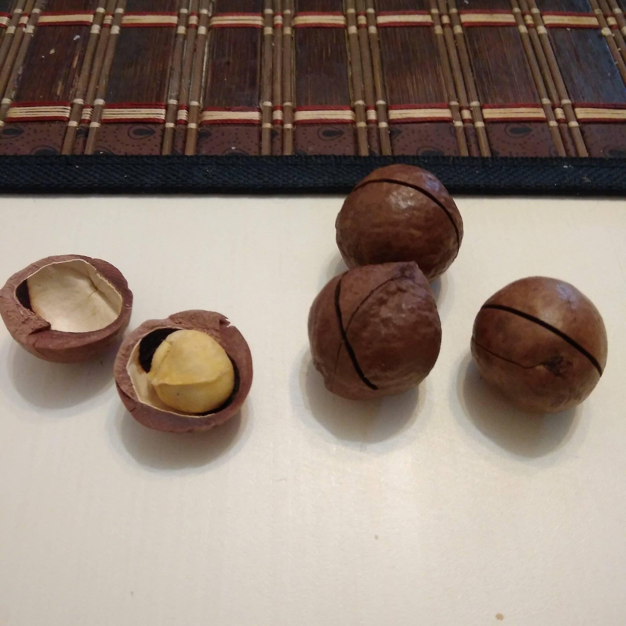 Макадамия —орех со вкусом шоколада и запахом ванили. полезные свойства