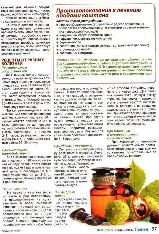Конский каштан: лечебные свойства при варикозе и собенности