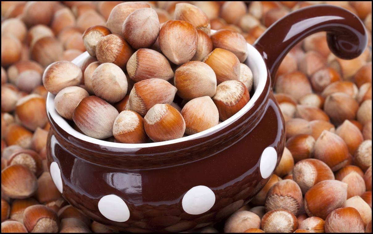 Фундук (орехи) — польза и вред для организма, свойства и противопоказания