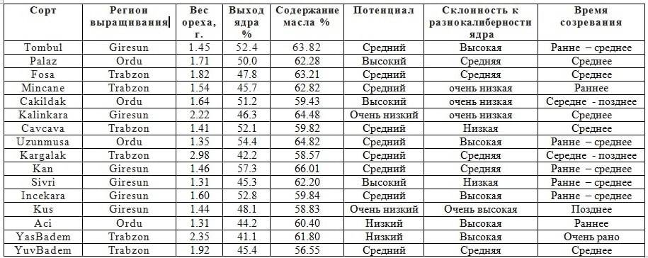 Фундук - полезные и опасные свойства фундука