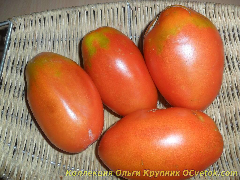Сорта помидор для открытого грунта краснодарского края