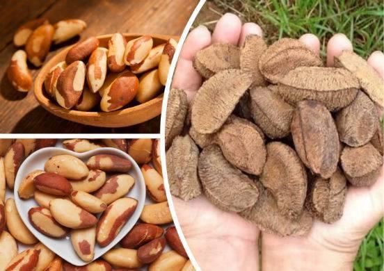 Бразильский орех — полезные свойства и противопоказания, вред для женщин и мужчин