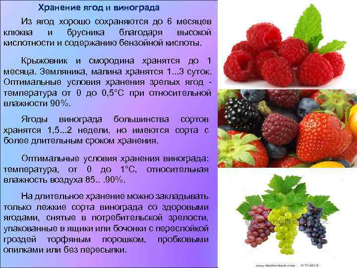 Свежие и переработанные овощи, плоды и грибы