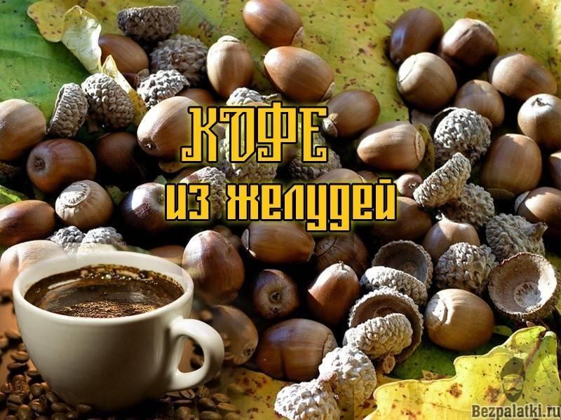 Кофе из желудей: польза и вред, как приготовить в домашних условиях
