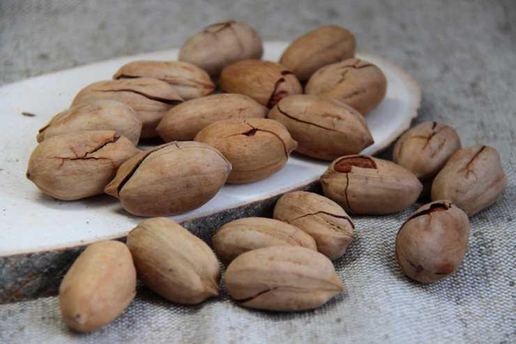 Орех пекан: где растет в россии? особенности выращивания ореха в россии, подмосковье и других климатических условиях