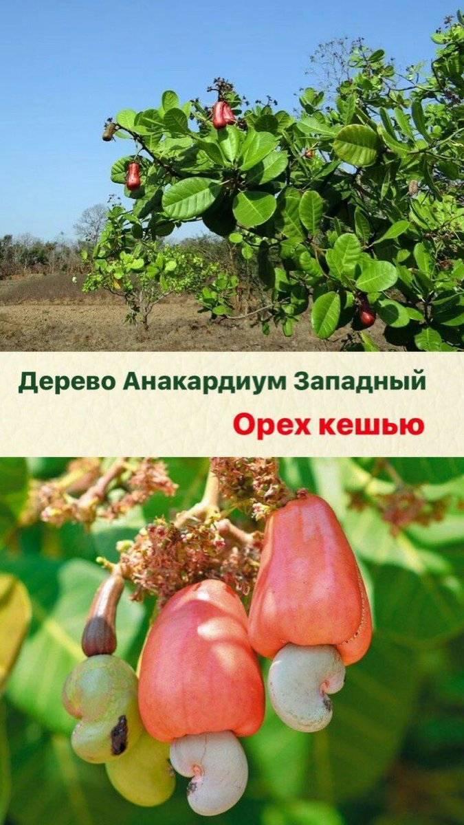 Плодовые растения: названия, фото и описания