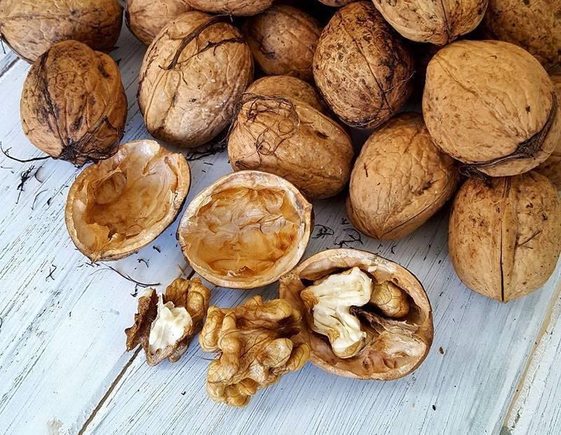 Почему горчат кедровые орехи, как убрать горечь из очищенных ядер, можно ли есть прогорклые плоды