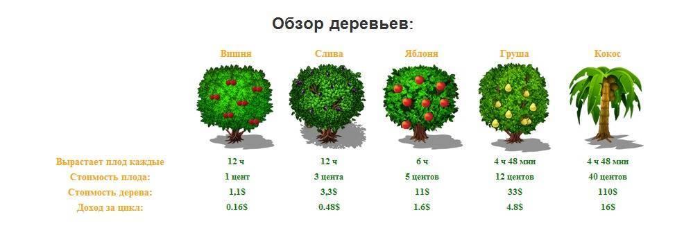 Как быстро растет сосна: обыкновенная за год, горная, черная, кедровая, как сдержать рост
