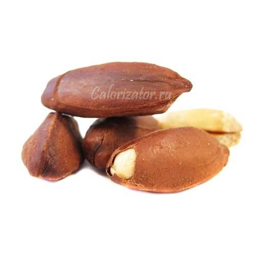 Орех пекан - польза и вред для организма мужчины и женщины