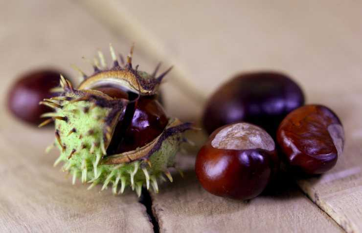 Каштаны и их польза и вред для организма человека, области применения и кулинарные рецепты блюд