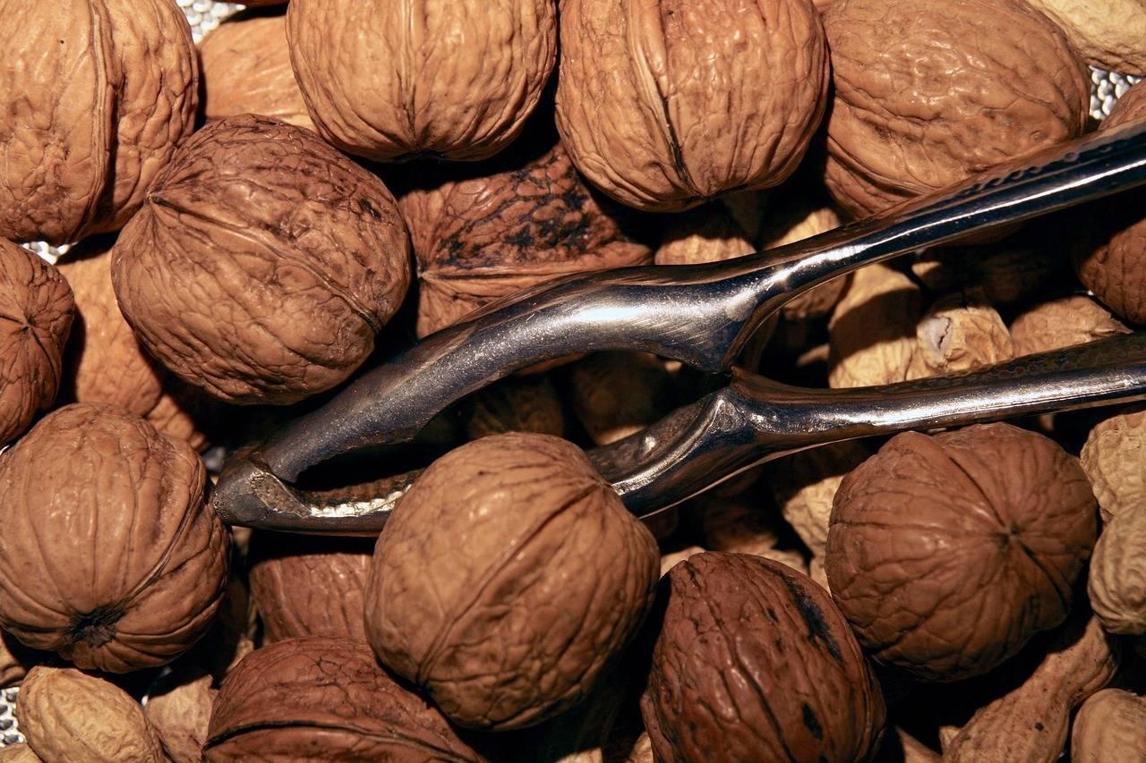 Грецкий орех сбрасывает плоды: почему это происходит, как предотвратить явление, и применение зеленых орешков, которые падают с дерева