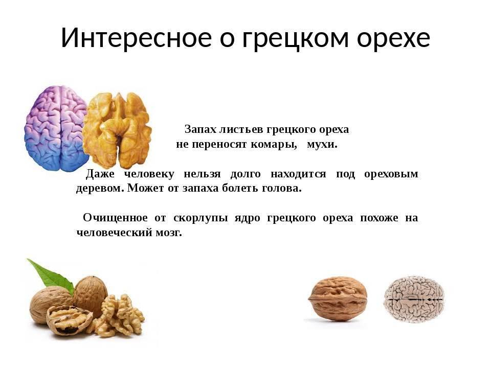 Как и где растет грецкий орех? особенности, страны и интересные факты :: syl.ru