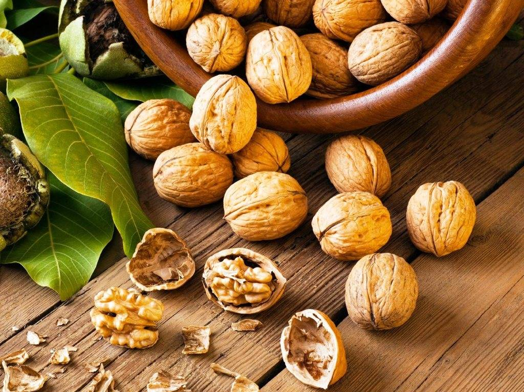 Грецкий орех: польза и вред для здоровья человека
