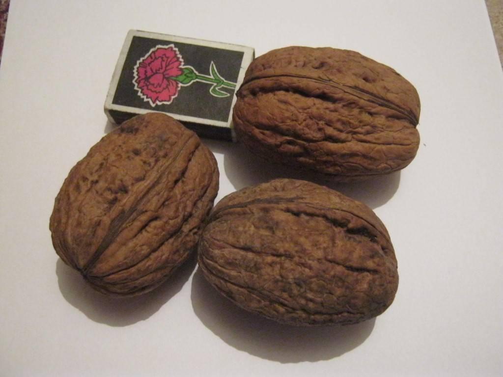 Грецкий орех сорт идеал – характеристики и особенности выращивания