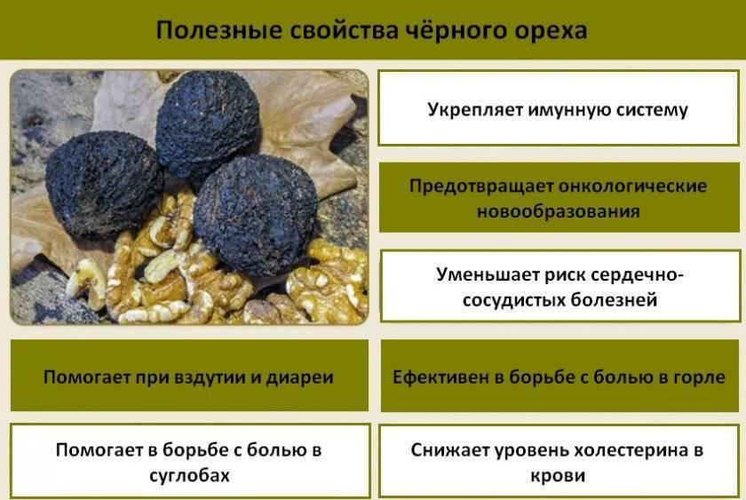 Настойка черного ореха и ее применение