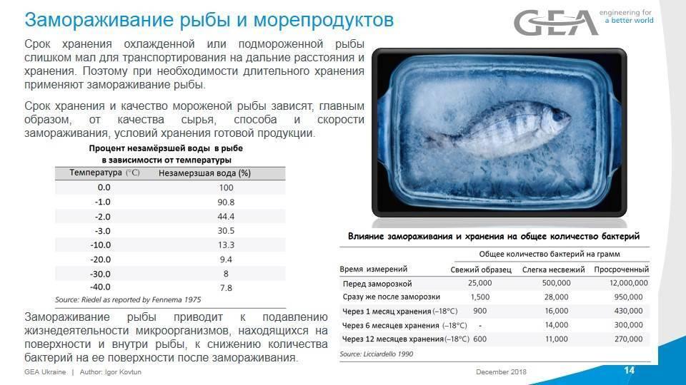 Лекции - холодильная обработка рыбных продуктов - 1.doc