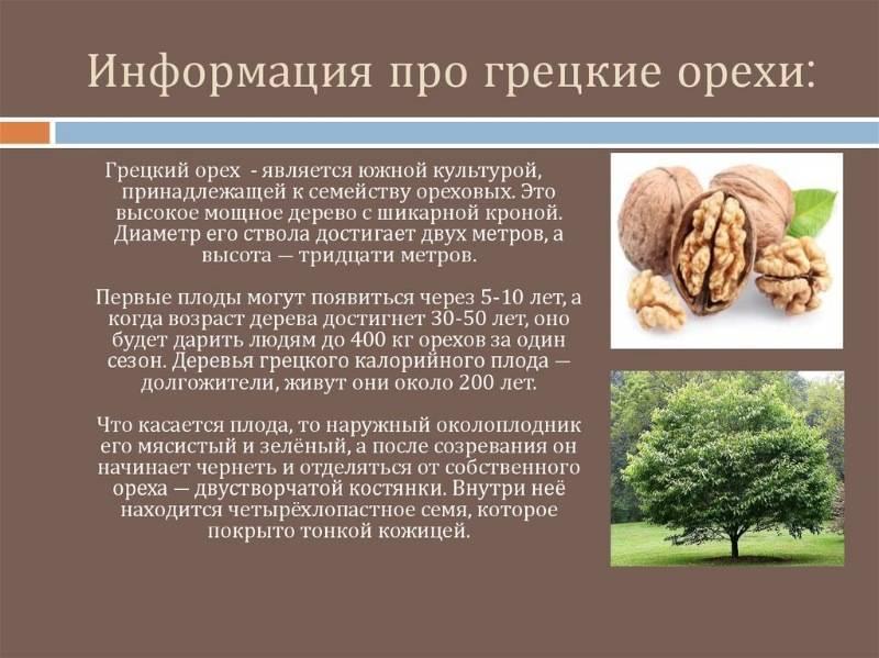 Новые сорта грецких орехов - выращивание из семян!
