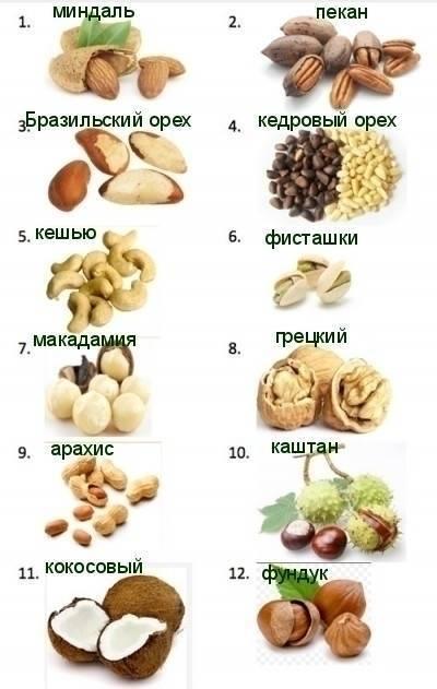 """Орех макадамия: как и где растет круглый """"орех с прорезью"""" - орех эксперт"""