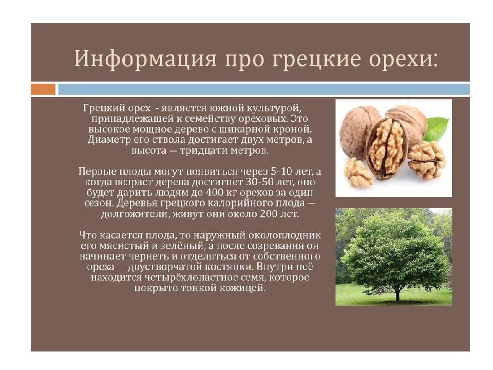 Все о грецком орехе — польза для женщин и мужчин, противопоказания и возможный вред от употребления