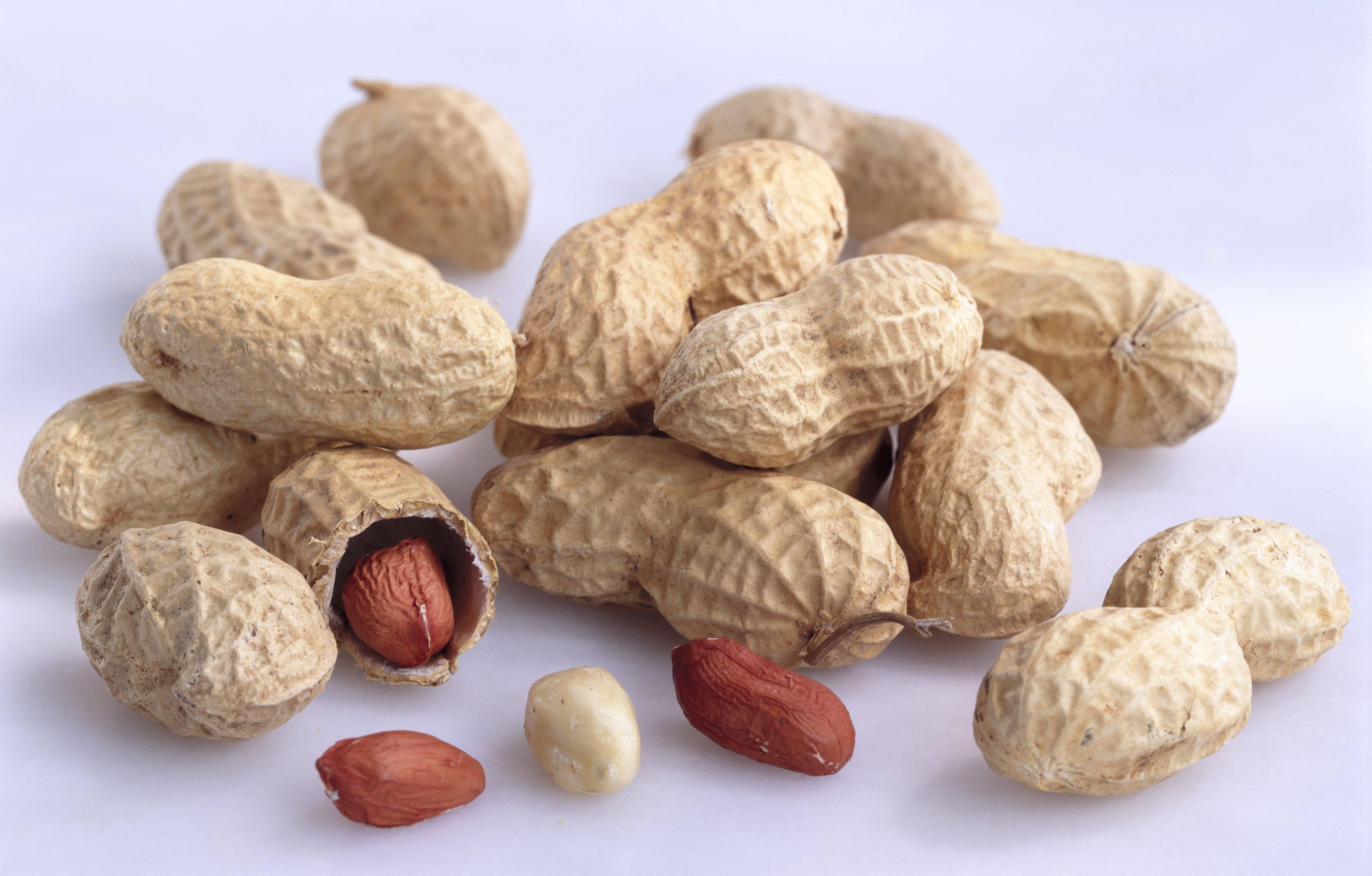 Какие виды орехов бывают – названия, фото