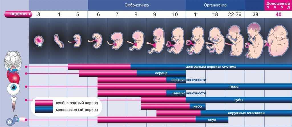 Чем полезен фундук для беременных