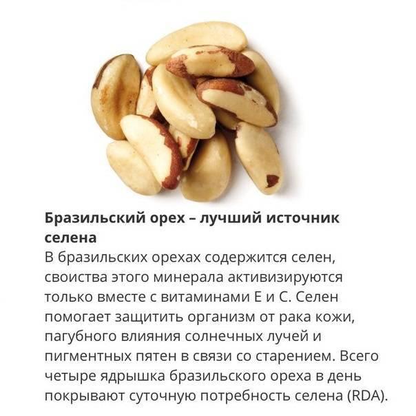 Польза, лечебные свойства и противопоказания к употреблению бразильского ореха