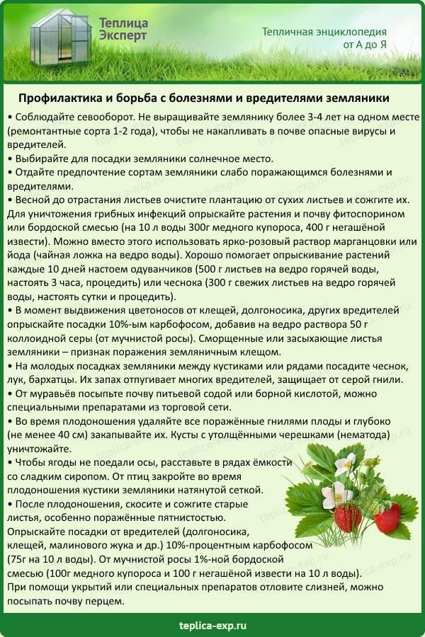 Грецкий орех выращивание и уход, обработка, сорта